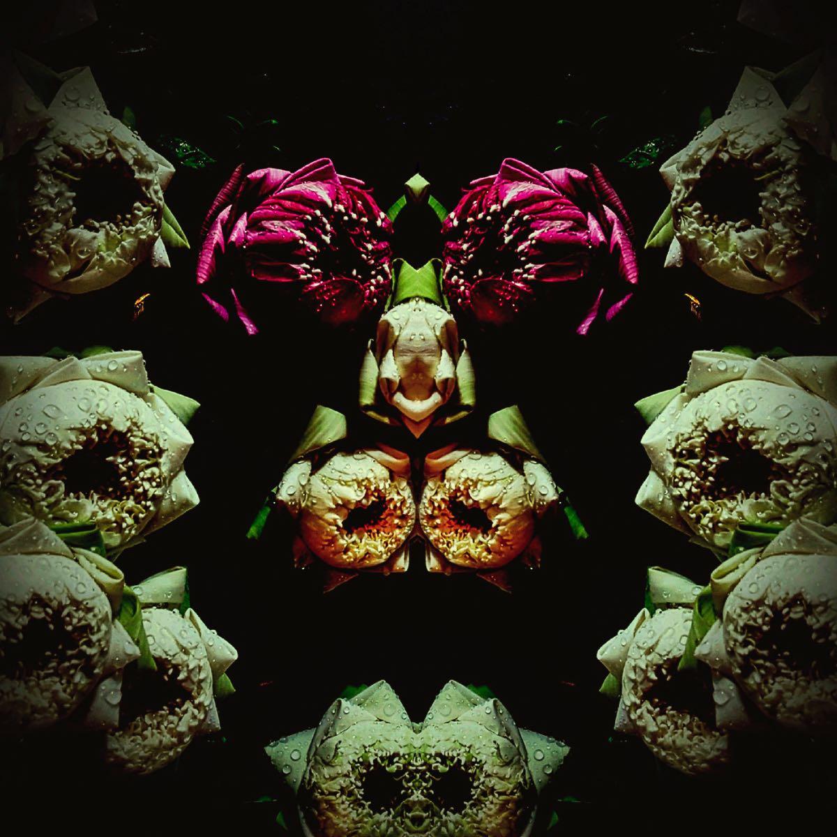 Subconscious - Flower Creatures #7 (40x40 cm) - Print on cotton paper 2020