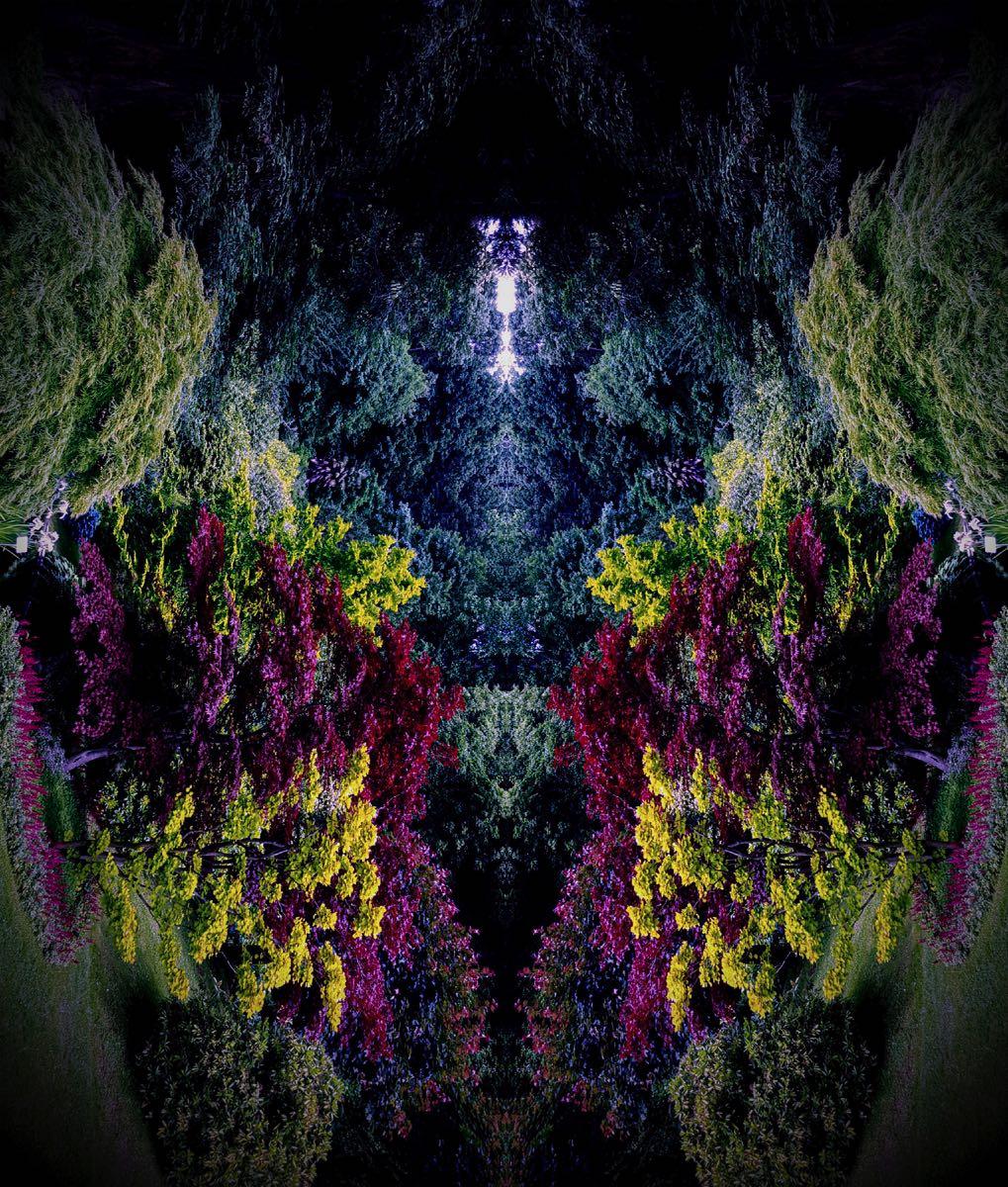 Subconscious - Tree Creatures #7 (40x40 cm) - Print on cotton paper 2020